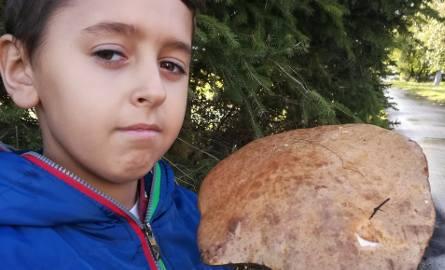 W gminie Czernikowo w pobliskim lesie mój 9-letni syn znalazł koźlarza wielkości 10-litrowego wiaderka! - pisze nam Czytelnik. - Koźlarz waży ponad 0,6