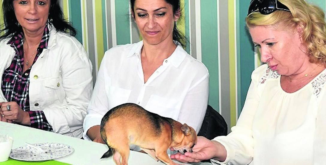 Kuratorzy mieli okazję potrenować w praktyce to, czego nauczyli się od psich behawiorystów.