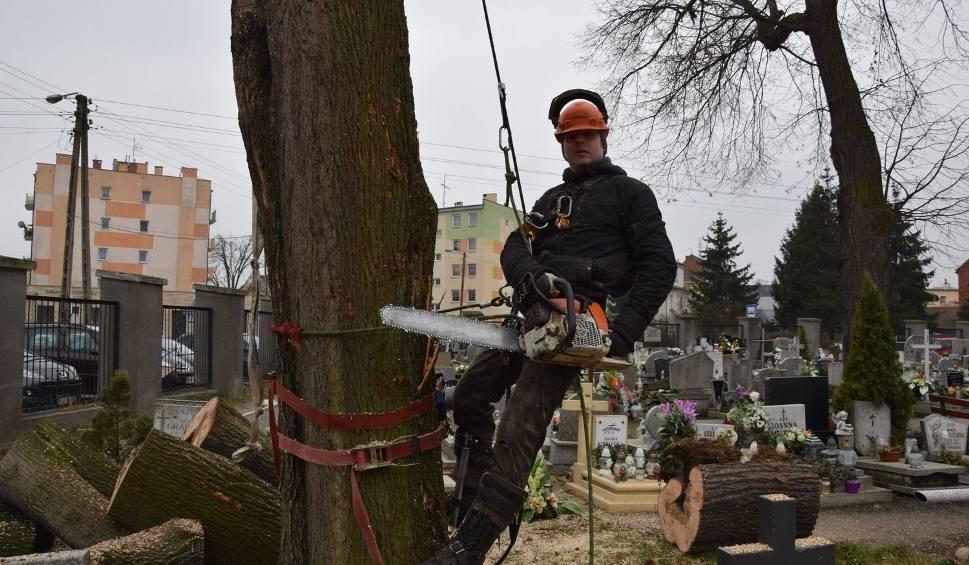 Film do artykułu: Akcja na cmentarzu przy ul. Wandy w Nowej Soli. Trzeba było usunąć drzewo uszkodzone przez wichurę