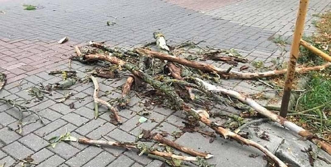 Mieszkańcy obawiają się drzew przy ul. Wyszyńskiego. Ich zdaniem są niebezpieczne dla przechodniów...
