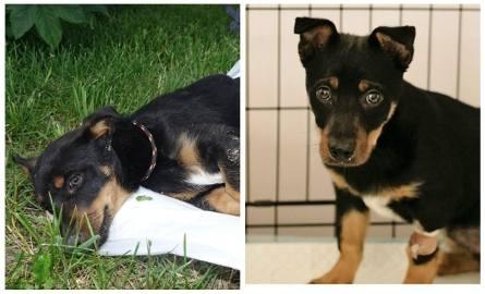 Psy z Radys potrzebują domów. Publikujemy zdjęcia kolejnych zwierząt czekających na adopcję.