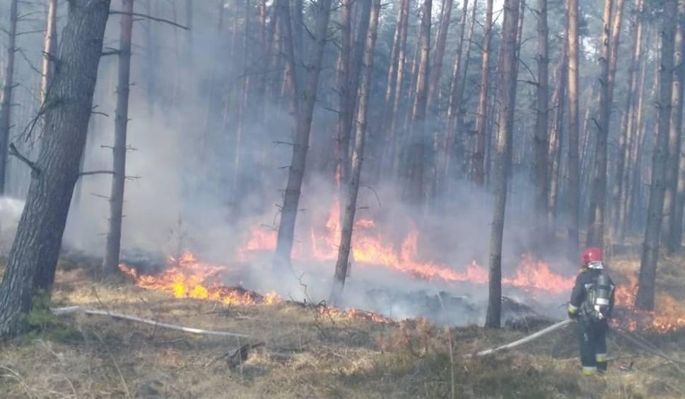 Film do artykułu: Pracowite święta strażaków i leśników. 93 pożary lasów w kwietniu [ZDJĘCIA]
