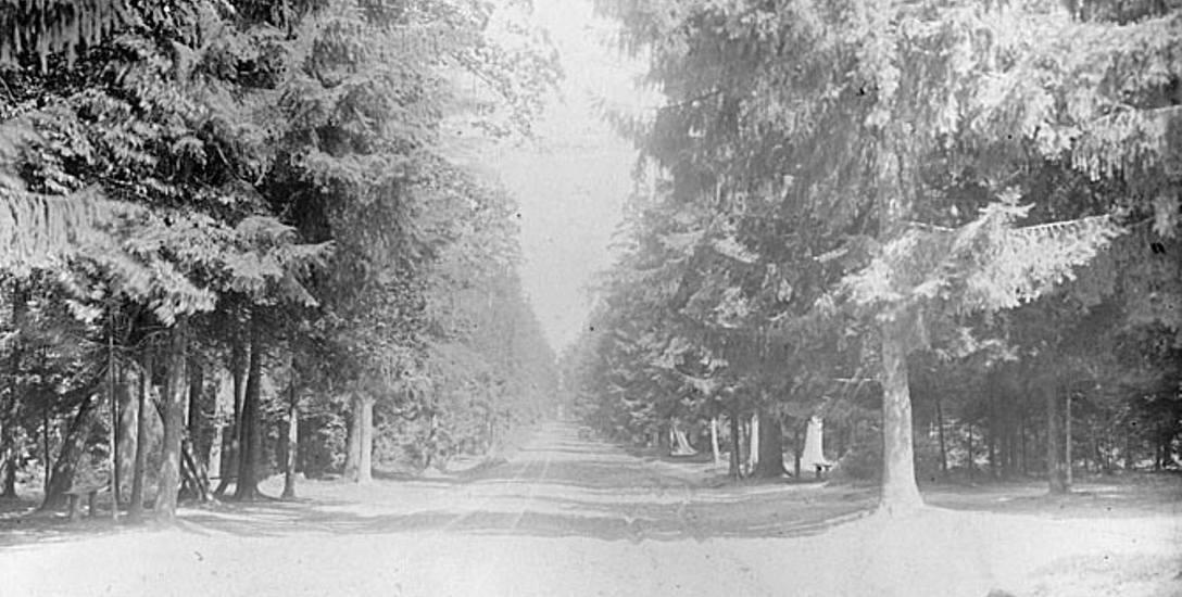 Na ostatniej karcie albumu znajduje się fotografia przedstawiająca główną aleję w Lesie Zwierzynieckim prowadzącą do budowanego w 1897 r. teatru letniego