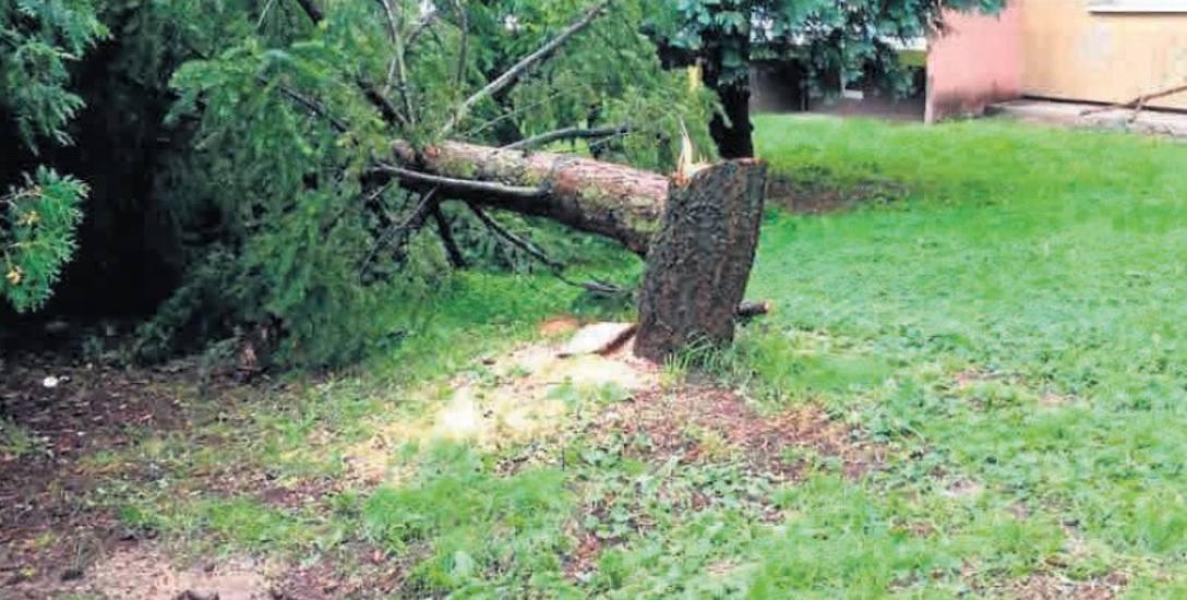 Przy wieżowcu przy ul. Romera 1 do wycięcia przeznaczono 13 drzew. Zdaniem przedstawicieli spółdzielni Kolejarz mogły one niszczyć budynek lub zagrażać