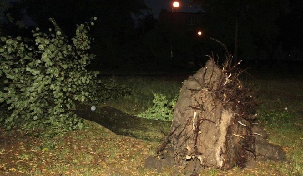 Film do artykułu: Burza nad regionem radomskim. W Warce drzewo przewróciło się na samochody. W regionie bez większych strat