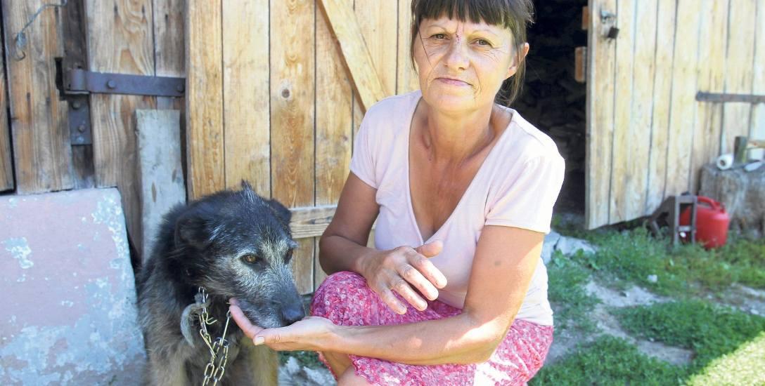 Barbarę Ilnicką zaatakował niedźwiedź w m. Lipa. Uratował ją pies