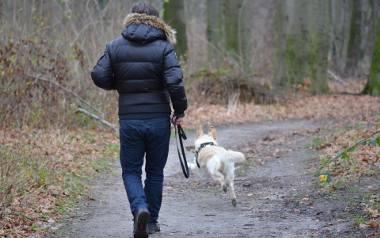 Za brak smyczy (otoku) w czasie spaceru z psem w lesie możemy dostać wysoki mandat.