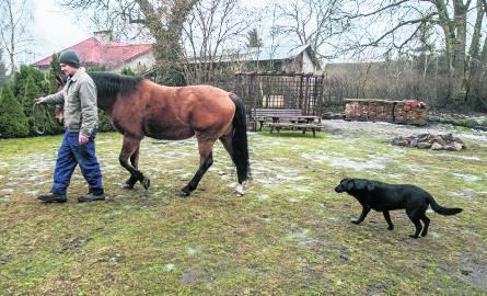 Czas na spacer. Tomasz Jasiulek zabiera Wigę na łąkę. Za przewodnikiem idzie największy pieszczoch w stadzie - czarna labradorka