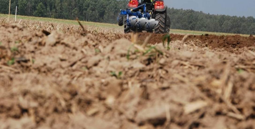 Niektóre plony są już nie do uratowania. Rolnicy liczą straty