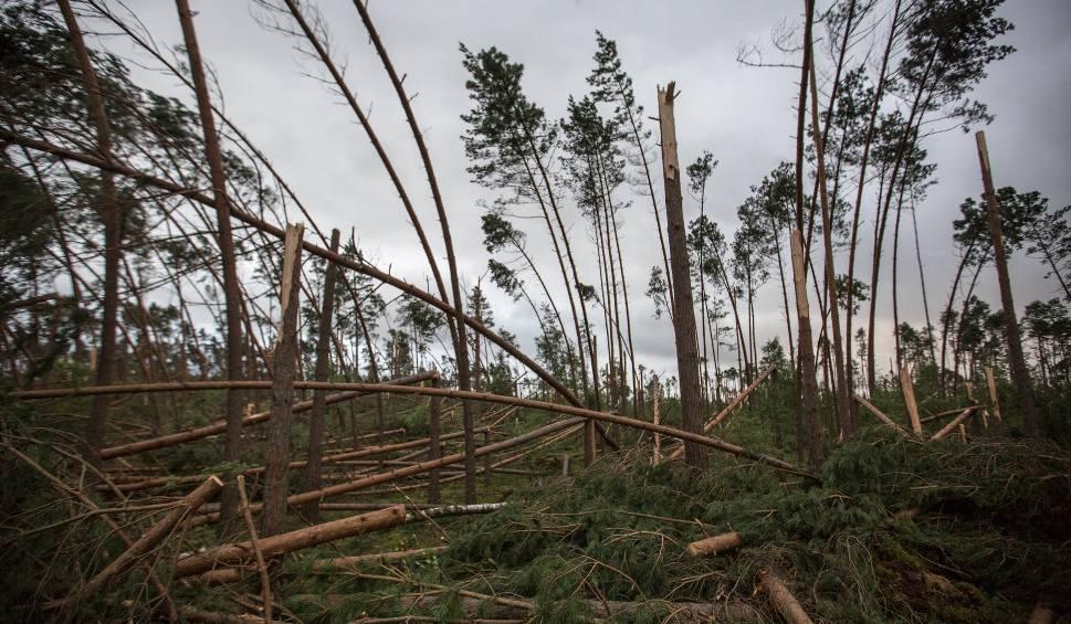 Film do artykułu: Usuwanie skutków nawałnicy na Pomorzu. Zniszczone lasy, domy bez prądu, nieprzejezdne drogi [raport]