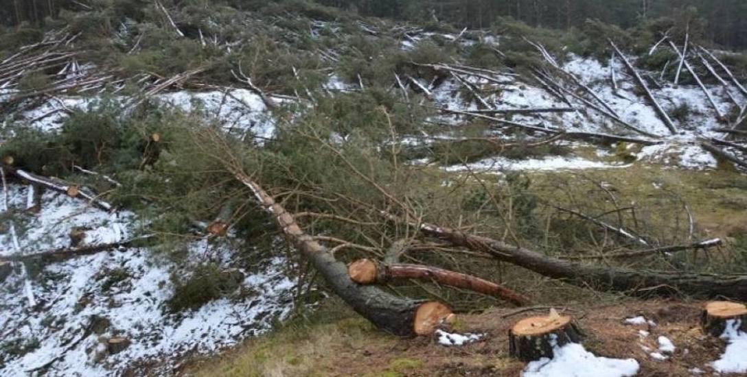 Właściciele działek z zarzutami za wycinkę lasu bażynowego w Łebie. Śledztwo trwa