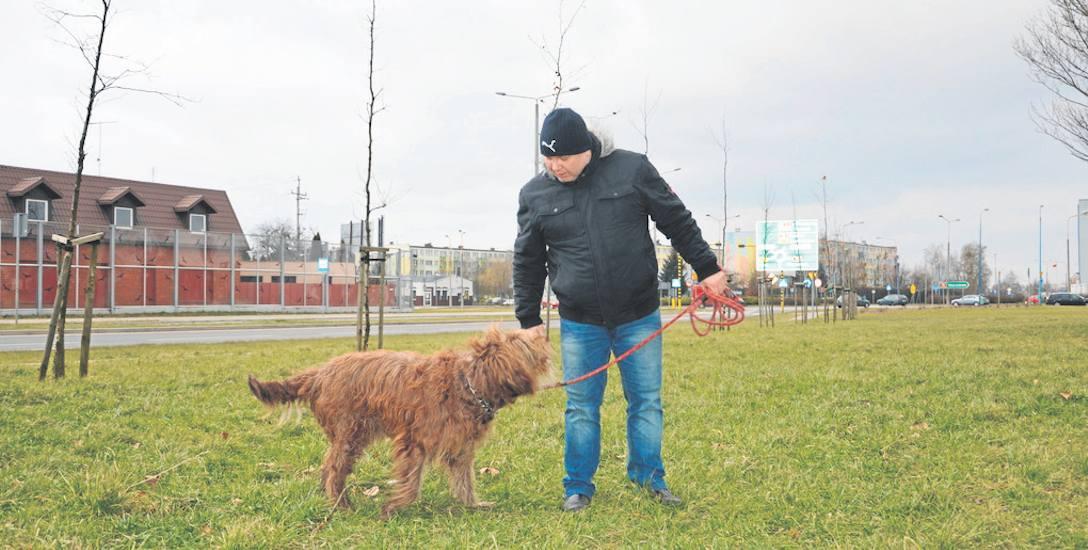 Nawet tysiąc złotych kary za spuszczenie psa ze smyczy. Właściciele czworonogów muszą pilnować swoich pupili