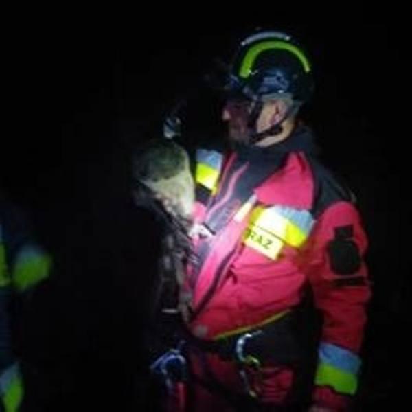 Niecodzienna akcja strażaków z Zębu. Ściągali z drzew... pawie [ZDJĘCIA]