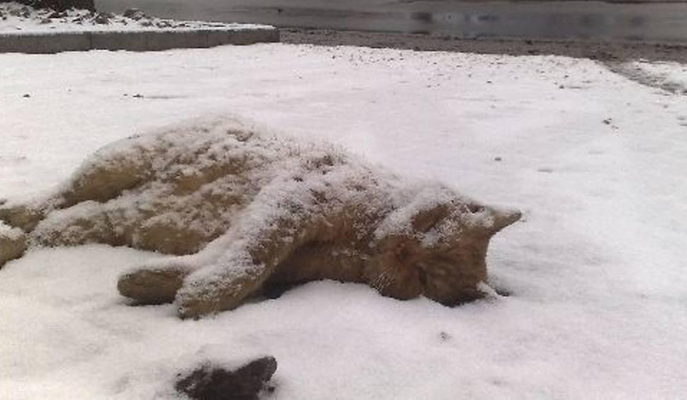 Przy Ul Gdańskiej Leży Martwy Kot Pomorskapl