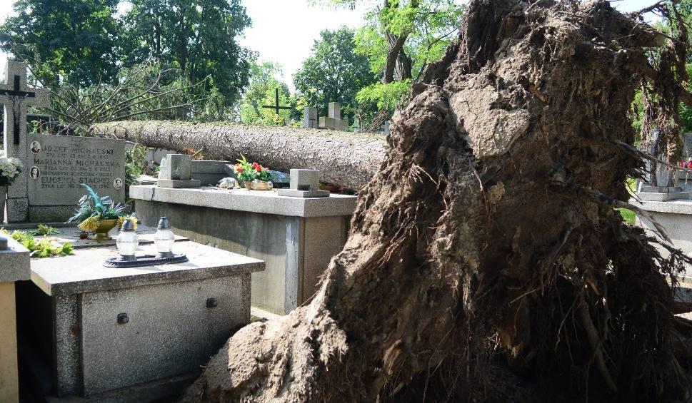 Film do artykułu: Radom. Zawierucha zniszczyła kilkadziesiąt grobów. Wiatr połamał drzewa na cmentarzu
