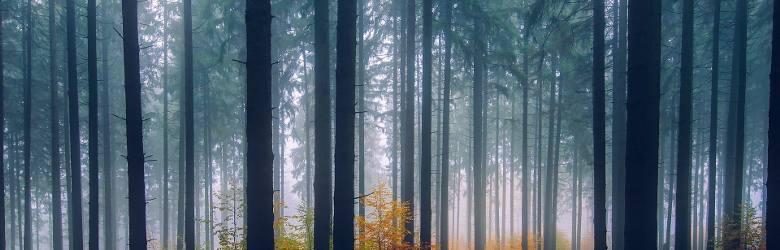 Drzewa wzywają deszczDrzewa potrafią przywołać deszcz, i nie jest to wcale bajka dla dzieci. Im większy upał, tym ich potencjał wzrasta - jak to robią?W