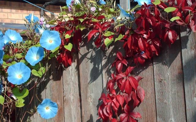 Ogród wiejski powinien być bardzo barwny.