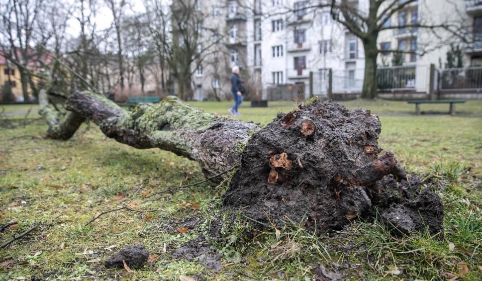 Film do artykułu: Ostrzeżenie meteorologiczne na Podkarpaciu: uwaga na silny wiatr!