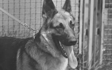 Te rasy psów królowały w PRL-u! Czy też miałeś takiego pupila?