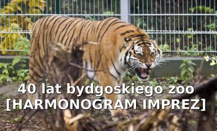 W tym roku bydgoski Ogród Zoologiczny świętuje 40-lecie istnienia. Świętowanie będzie trwało do 27 lipca, a w programie przewidziano mnóstwo atrakcji