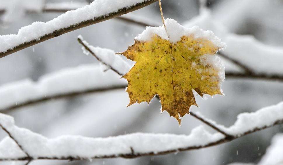Film do artykułu: Pogoda w Łodzi regionie na piątek. Ślisko! Sprawdź prognozę pogody na 14 grudnia 2018 dla województwa łódzkiego