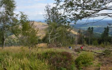Na przełęczy pomiędzy Kopą Biskupią a Srebrną Kopą powstał wylesiony obszar o powierzchni ok. 120 hektarów. Turyści mogą podziwiać okolicę z zupełnie