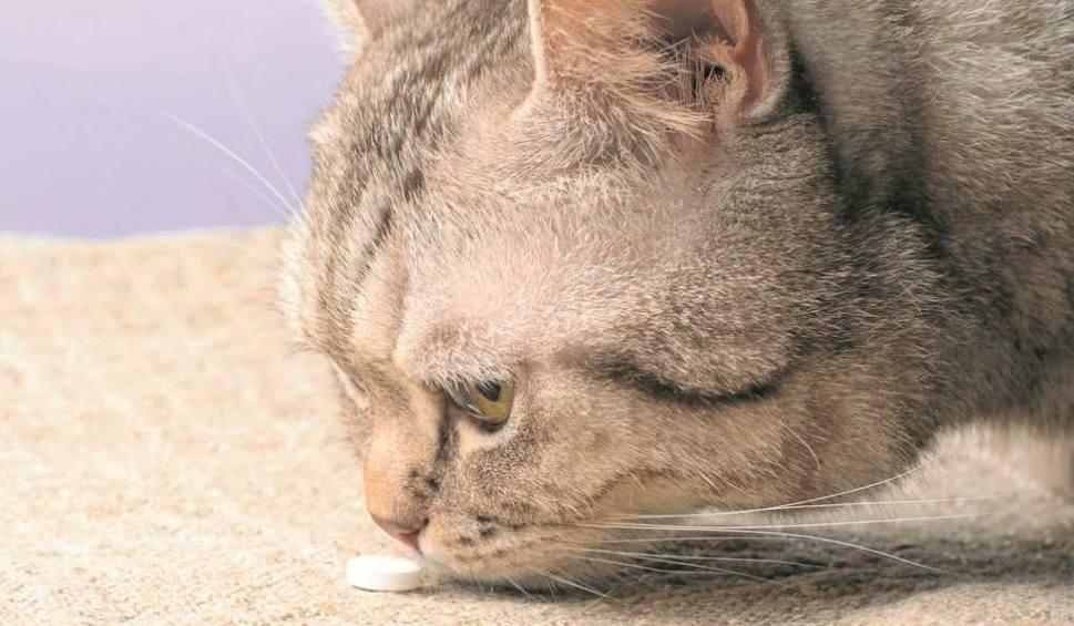 Film do artykułu: Lekarstwa, które mogą zabić kota