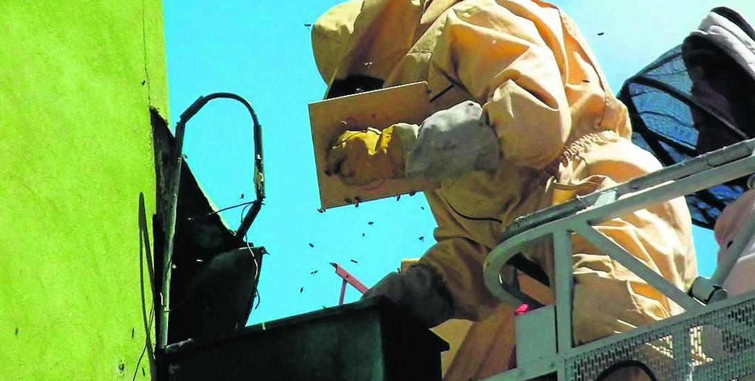 Strażacy mają kombinezony i sprzęt do walki z owadami. Dzięki temu osy i szerszenie nic im nie zrobią