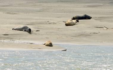 Przedstawiciele WWF obawiają się, że gdyńska prokuratura może umorzyć śledztwo w sprawie fok. Ich zdaniem postępowanie stanęło w miejscu