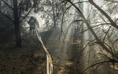 Na portalu zrzutka.pl trwa zbiórka pieniędzy na posadzenie nowego lasu w Fordonie. Internauci zadziałali błyskawicznie