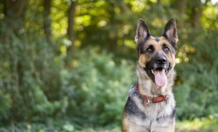 Trzy miesiące prac społecznych i kary finansowe za zastrzelenie psa – taki wyrok usłyszał Stanisław A.