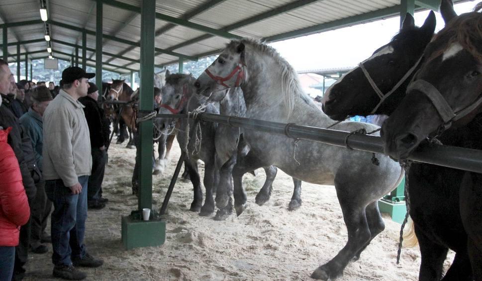 Film do artykułu: Wstępy 2019 w Skaryszewie. To doroczne święto koni i ich hodowców oraz jarmark, przyciągający gości z całej Europy. Ma nie być koni na rzeź
