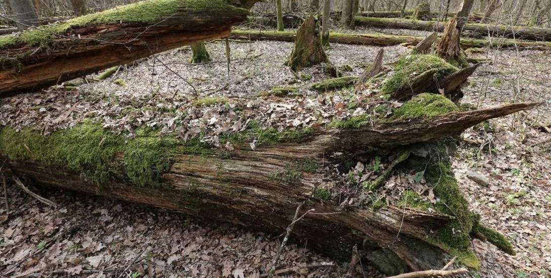 Parki narodowe na Podlasiu zarabiają. Ale nie wszystkie