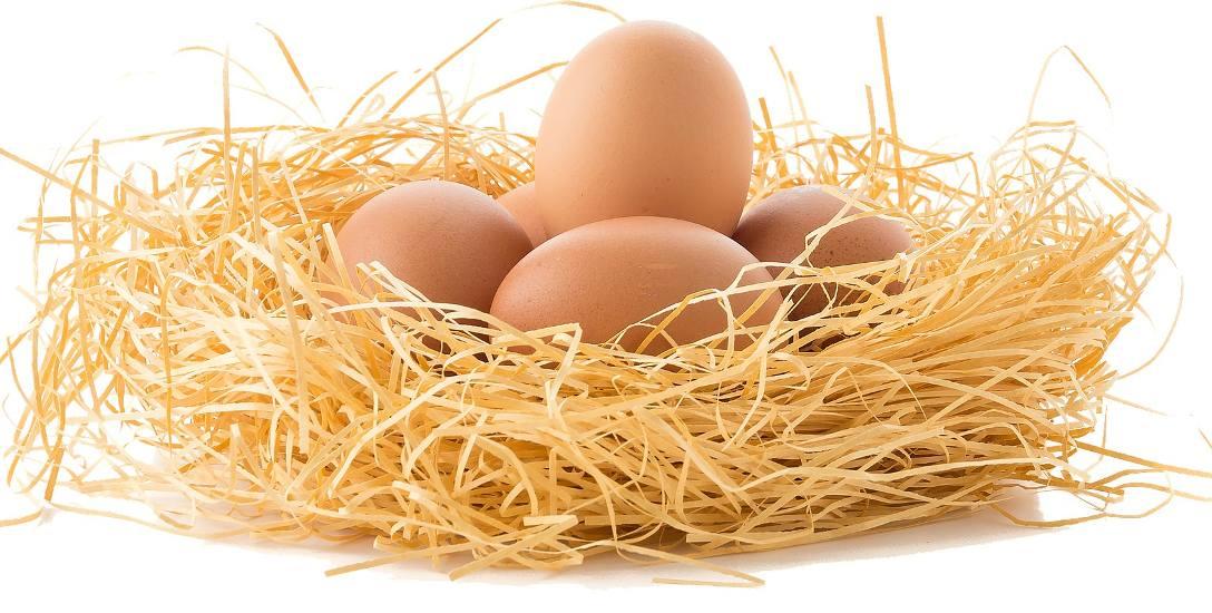 Andrzej Kruszewicz: Jajo jest symbolem świąt, bo z czegoś, co wydaje się martwe budzi się życie