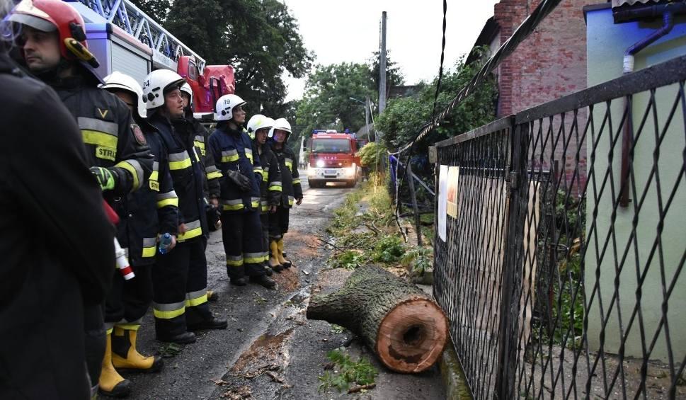 Film do artykułu: Od wczoraj w Lubuskiem mocno wieje! Strażacy już kilkadziesiąt razy wyjeżdżali do powalonych drzew