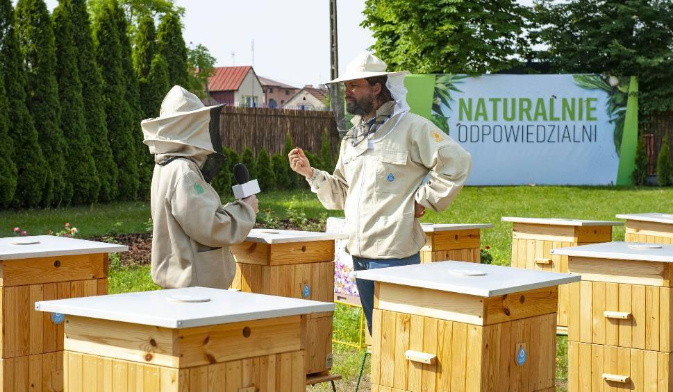 Film do artykułu: Co słychać w firmowej pasiece Dafi w Kielcach? Pszczoły mają tu dobre warunki do życia. Niebawem rozpoczną się przygotowania do zimy
