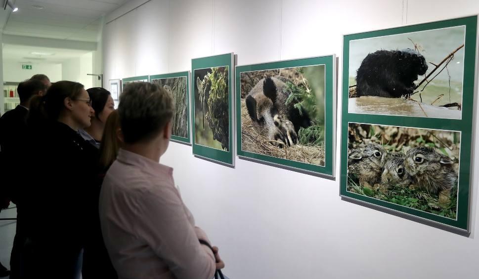 Film do artykułu: Nowa galeria Orbital na ZUT w Szczecinie otwarta. Są tam piękne zdjęcia przyrody [WIDEO, ZDJĘCIA]