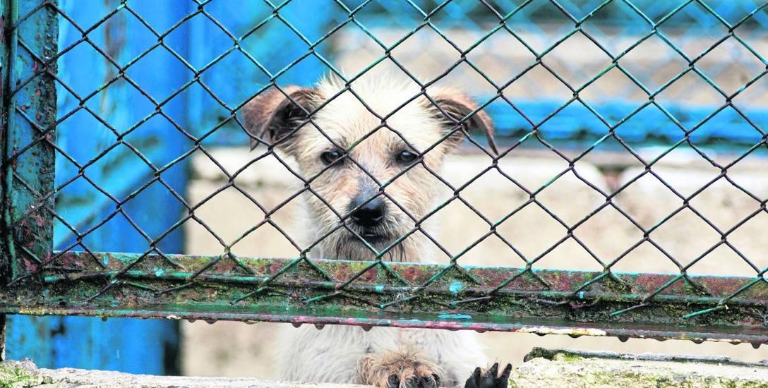 Formalnie nikt nie zgłosił się do konkursu na prowadzenie schroniska dla zwierząt w Słupsku. Urząd rozważa zmianę formuły i tymczasowe przedłużenie umowy