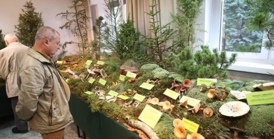 Wyprawa na grzyby do Ogrodu Botanicznego, weekend pod znakiem grzybobrania