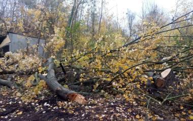 W parku przy Grunwaldzkiej rozpoczęła się wycinka drzew i krzewów pod budowę Centralnego Zintegrowanego Szpitala Klinicznego w Poznaniu. Zdaniem ekologów