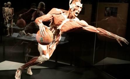 """Wystawa """"Body Worlds & The Cycle of Life"""" w Porcie Łódź"""