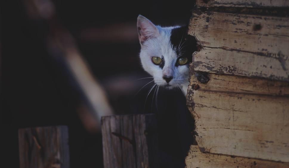 Film do artykułu: Skatowany kot padł w lecznicy w Lubartowie. Nad zwierzęciem znęcał się 70-letni sąsiad właścicielki