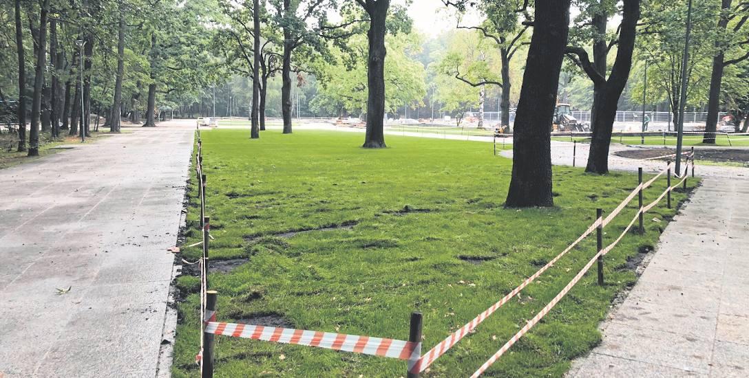 Na zdjęciu widać zrytą przez dziki trawę. Wykonawcy prac muszą zabezpieczać te miejsca specjalną taśmą