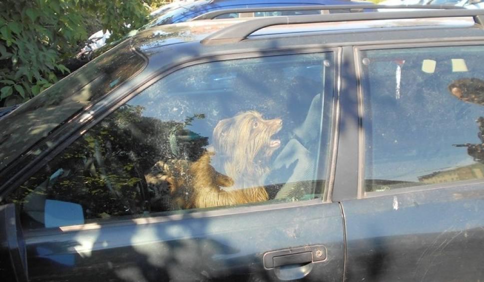 Film do artykułu: Na parkingu w Wejherowie. Zostawił psa w samochodzie i poszedł do pracy [zdjęcia]