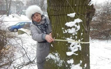 - Ta lipa rośnie tu ponad 70 lat i ma w obwodzie 165 cm - mówi Krystyna Gruchociak, która do końca chciała ocalić piękne drzewo
