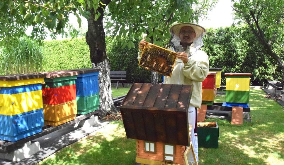 Film do artykułu: W Żorach pszczoły mają się świetnie. Z wizytą u pszczelarza Leszka Szwedy - ZDJĘCIA I WIDEO