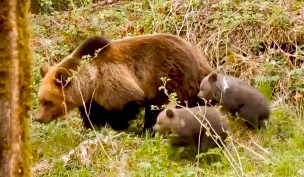 Film do artykułu: Wiosna w Bieszczadach. Jakie rośliny i zwierzęta można spotkać w bieszczadzkich lasach? [WIDEO]