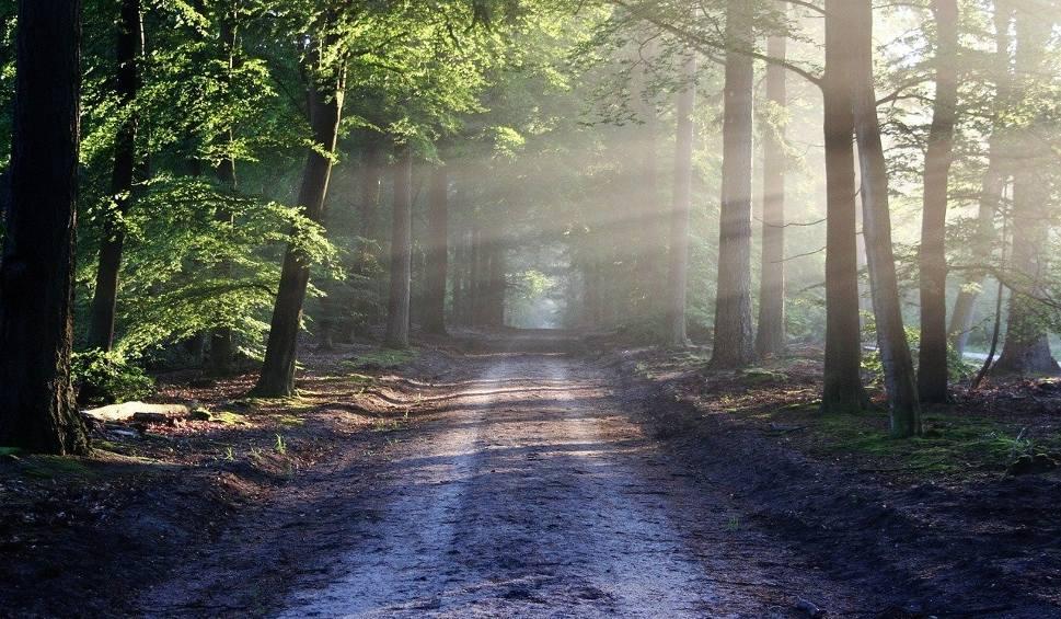 Film do artykułu: Rząd wprowadził tymczasowy zakaz wstępu do lasów. Przez koronawirusa