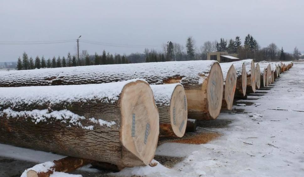 Film do artykułu: Leśnicy wystawili na sprzedaż najładniejsze kłody z podkarpackich lasów. W czwartek wielki przetarg na cenne gatunki drewna [ZDJĘCIA]