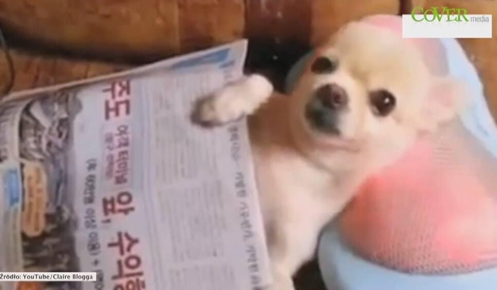Film do artykułu: Te psy przepadają za masażem [wideo]